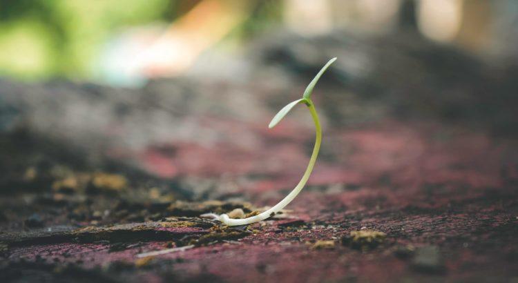 Wachstum durch Minderung